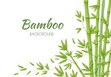 Green bamboo stems with green leaves on a white background. Vector illustration royalty free illustration
