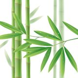 Green bamboo stems with leaves on white Stock Images