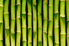 Green Bamboo Stems Natural Plant Background Royalty Free Stock Image