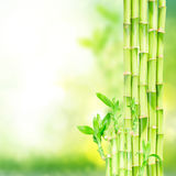 Green bamboo stems Stock Photo