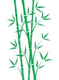 Green bamboo stems. On white background Stock Images