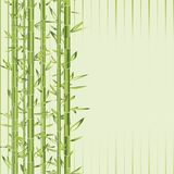 Green bamboo with stripe Stock Photos