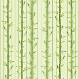 Green bamboo with stripe Royalty Free Stock Photo