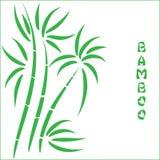 Green bamboo t Stock Photos
