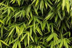 Green bamboo texture Stock Photos