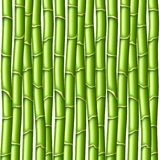 Bamboo texture vector background Royalty Free Stock Photography