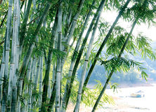 Green bamboo tree. The green bamboo tree in riverside Royalty Free Stock Photography