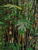 Green Bamboo Tree. In forest Stock Photo