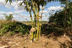 Green bamboo tree in a garden Stock Photos