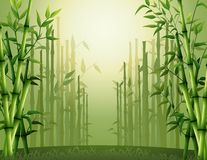 Green bamboo trees background inside the forest Royalty Free Stock Photos