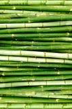 Green bamboo trees Royalty Free Stock Photos