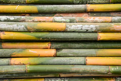 Green bamboo trees. For decorations at the temple Royalty Free Stock Photography