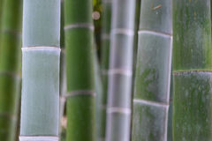 Green Bamboo trees in Japan Royalty Free Stock Photography