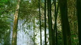 Green Bamboo on Tropical Waterfall stock video