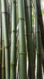 Green bamboo trunk. The feel of ASIA and freshness Stock Images