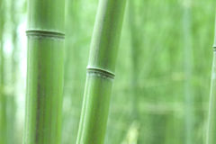 Green bamboo trunk Stock Photo