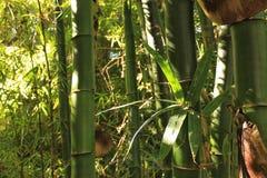 Green bamboo trunks.  Stock Photos