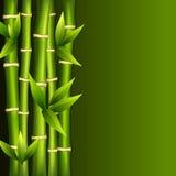 Green bamboo Royalty Free Stock Image