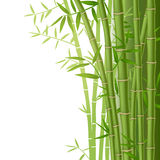 Green bamboo vector illustration Royalty Free Stock Photo