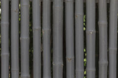 Green bamboo wall texture background. Stock Photos
