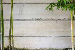 Green bamboo and wall. The green bamboo tree and the concrete wall Stock Image