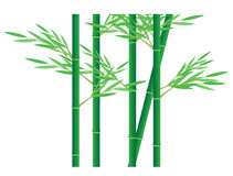 Green Bamboo Royalty Free Stock Photography