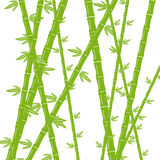 Green bamboo on a white background Royalty Free Stock Image