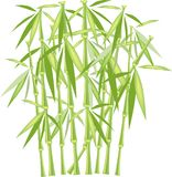 Green bamboo on a white background, isolated object. Green and yellow stems and leaves Stock Image