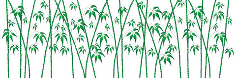 Green bamboo on white Stock Photos