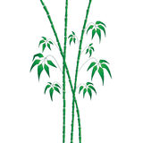 Green bamboo on white Royalty Free Stock Images