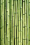 Green bamboo wood wall background texture vertical. Green bamboo wood wall background texture royalty free stock photography