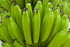 Green Banana. Background in Thailand Royalty Free Stock Photography