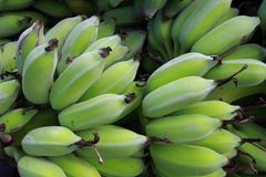 Green banana background. Close up green banana  background Stock Images