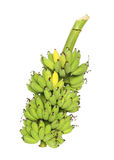 Green banana bunch Royalty Free Stock Image