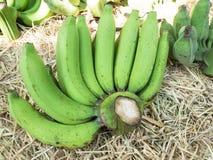 Green banana bundle for sale.  Royalty Free Stock Photos
