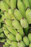 Green banana Stock Photography