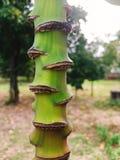 Green banana flower branch chit stem in garden.  royalty free stock images