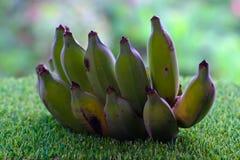 Green banana on green grass. Bunch of green bananas on grass Royalty Free Stock Photography