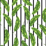 Green banana leaves on black and white background. Seamless pattern. Vector. Green banana herb on black and white background. Seamless pattern. Vector royalty free illustration