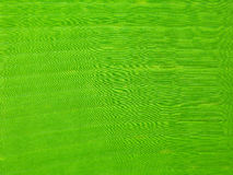 The Green Banana Leaf Royalty Free Stock Photos