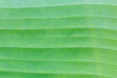 Green banana leaf background abstract Royalty Free Stock Photography