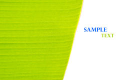 Green banana leaf background abstract Royalty Free Stock Photos