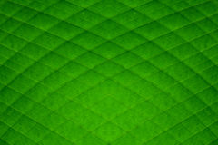Green banana leaf diamond stripes abstract background Stock Photography
