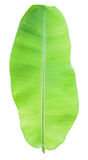 Green banana leaf Stock Photos