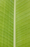 Green Banana leaves background abstract Royalty Free Stock Photography