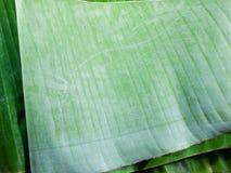 Green banana leaves Royalty Free Stock Photos