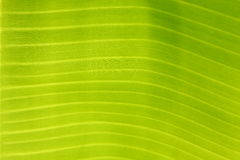 Green banana leaves plate texture Stock Image