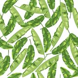 Green banana leaves on white background. Seamless pattern. Vector. Green banana herb on white background. Seamless pattern. Vector vector illustration