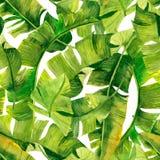Green banana palm leaves on the white background.Tropic seamless pattern. Tropical jungle foliage illustration. Exotic plants. Sum. Mer beach design. Paradise stock illustration