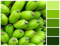 Green banana texture with palette color swatches Royalty Free Stock Image